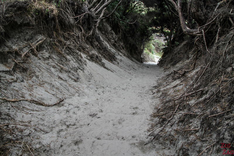 Wharariki Beach Walk - access track 3