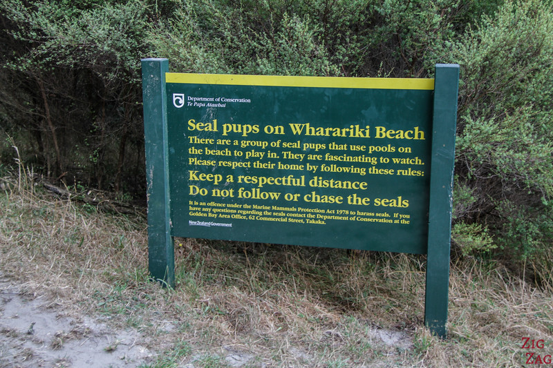Seal pups in Wharariki tidal pools 1