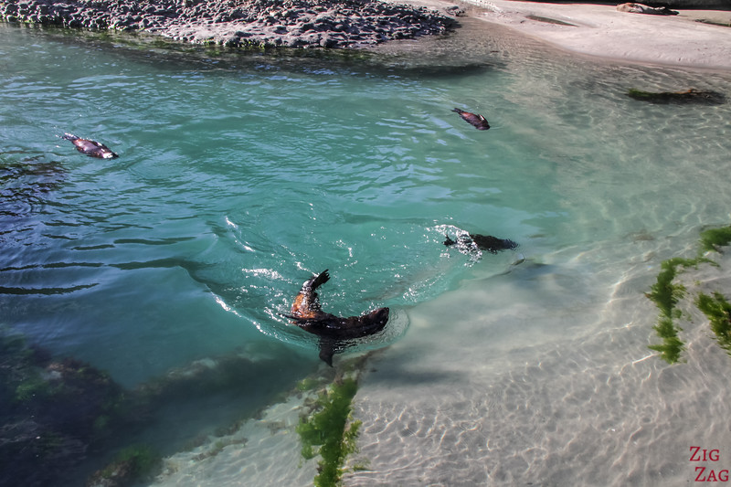 Seal pups in Wharariki tidal pools 4