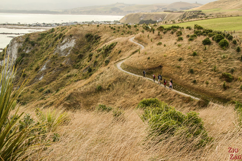 Kaikoura peninsula walking track