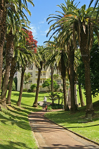 Palm Trees in Myers Park, Auckland, New Zealand