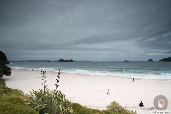 Hahei Beach - Coromandel : New zealand