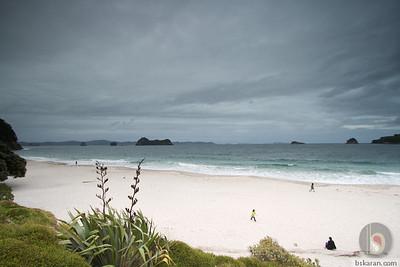 Hahei Beach - Coromandel : New zealand