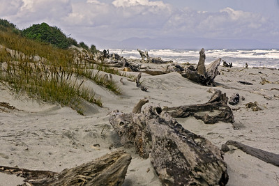 A view of the logs strewn around the beach at Ship Creek  January 2010