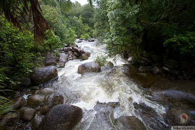 Kaimai-Mamaku Forest Park: New Zealand