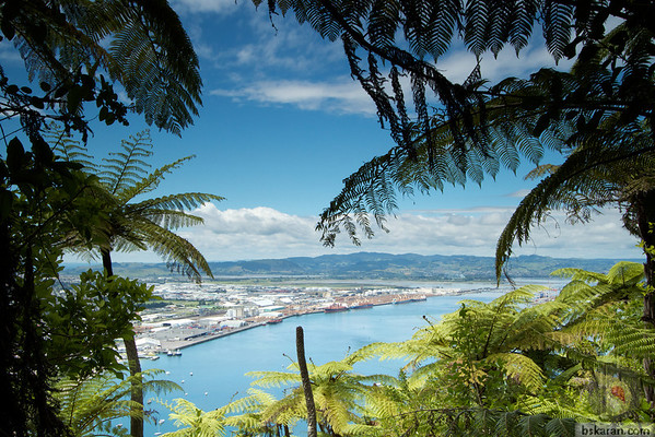 Mount Maunganui - Tauranga - Bay Of Plenty : New Zealand