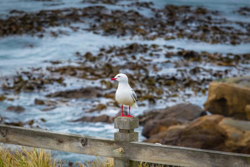 Near Dunedin, New Zealand