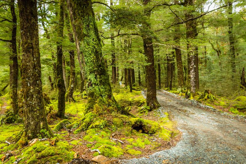 Near Milford Sound, New Zealand