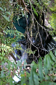 Small creek near Milford Sound, Fjordland, South Island, New Zealand