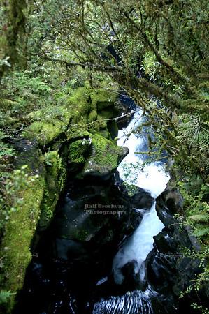 Bizarre landscape along Milford Road, Southland, South Island, New Zealand