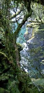 Jungle-like flora at a small creek near Milford Sound, Fjordland, South Island, New Zealand