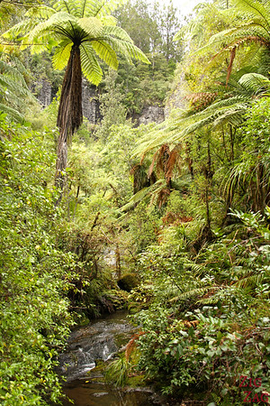 Rainforest Waikatere Ranges, New Zealand Photo 3