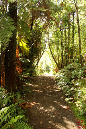 Rainforest Waikatere Ranges, New Zealand Photo 1