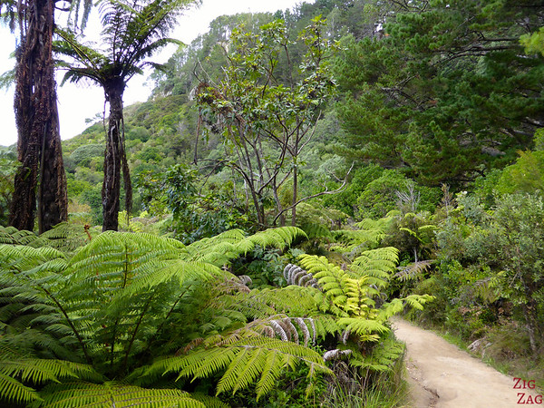Cathedral cove hike, Coromandel, New Zealand, photo 5