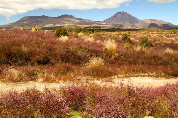 Landscape of Tongariro NP New Zealand Photo 3
