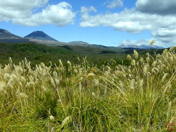 Landscape of Tongariro NP New Zealand Photo 1