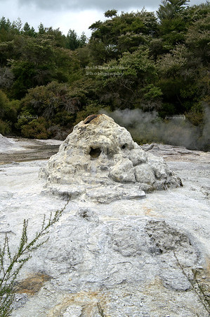 Lady Knox Geyser, Wai-O-Tapu Geothermal Wonderland, Rotorua, North Island, New Zealand ... Silica sediments from years of eruptions cover the rocks now and give it the white cone shape. . . .