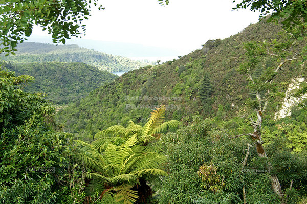 Scenic view from the waterfall trail near the buried village of Te Wairoa, North Island, New Zealand