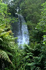 On the waterfall trail near the buried village of Te Wairoa, North Island, New Zealand