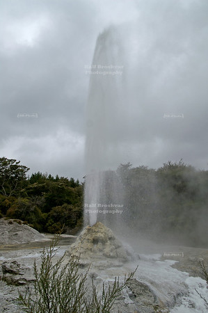 Lady Knox Geyser, Wai-O-Tapu Geothermal Wonderland, Rotorua, North Island, New Zealand .. although: The eruption is triggered when a park ranger tosses a bar of soap into the cone . . .