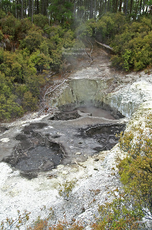Boiling pothole in Wai-O-Tapu Geothermal Wonderland, Rotorua, North Island, New Zealand