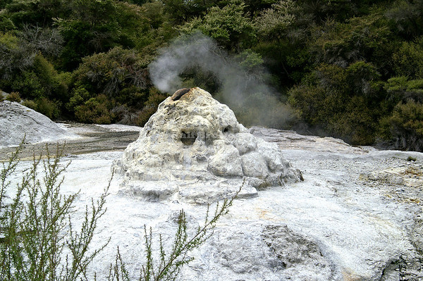 Lady Knox Geyser, Wai-O-Tapu Geothermal Wonderland, Rotorua, New Zealand. The cone-shaped spout is not the only thing fake with this geyser....