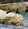 Seals -- Queen Charlotte Sound