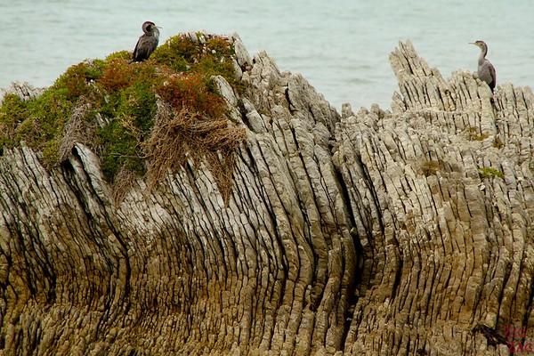 Seal colony at Kaikoura peninsual photo 1