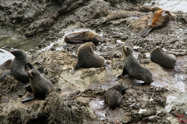 Ohau Point seal colony, New Zealand Photo 7