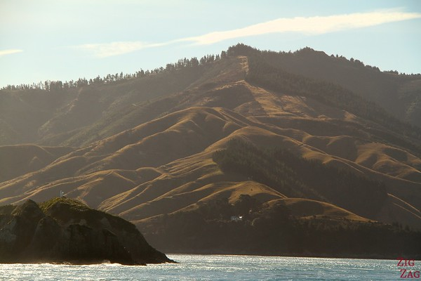 Ferry , Malborough Sound, New Zealand photo 1