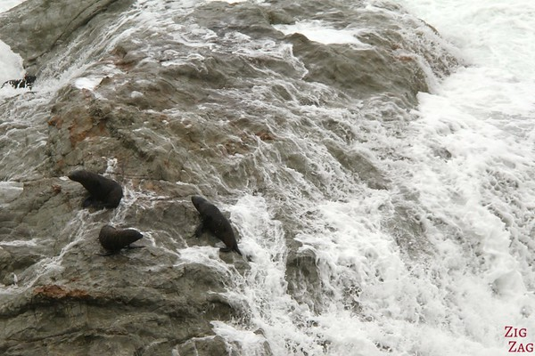 Ohau Point seal colony, New Zealand Photo 5