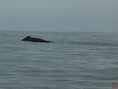 Spotting a sperm whale, Kaikoura, New Zealand