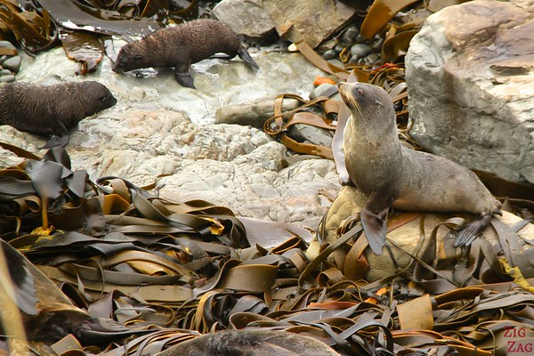 Ohau Point seal colony, New Zealand Photo 4