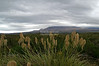 Tall grass and scenic view near Mount Ngauruhoe, North Island, New Zealand