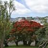 A Pohutukawa tree (New Zealand Christmas Tree) in Auckland, North Island, New Zealand
