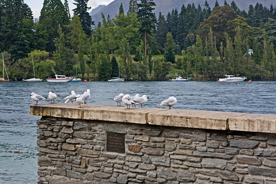 Seagulls on Lake Wakatipu at Queenstown.