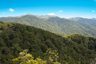Tararua Forest Park -Wairarapa: New Zealand