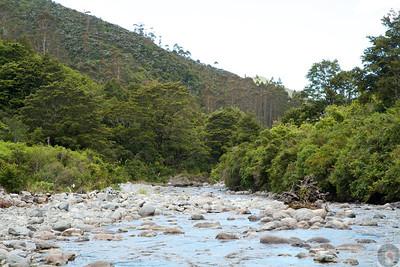 Tararua Forest Park -Wairarapa: New Zealand