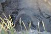mud-spewing thermal hotspot, Rotorua