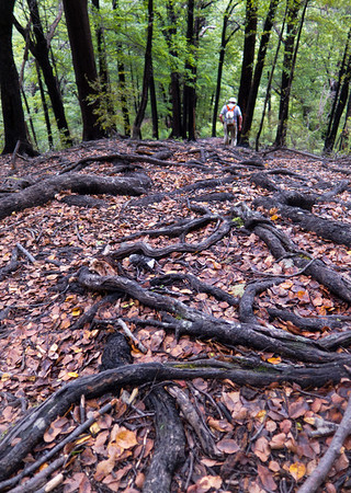Tree roots, Queen Charlotte track, Marlborough Sounds.