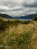 Lake Hawea #2, South Island
