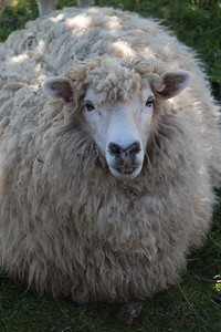 SheepFarm_Dec07_HSB_0738