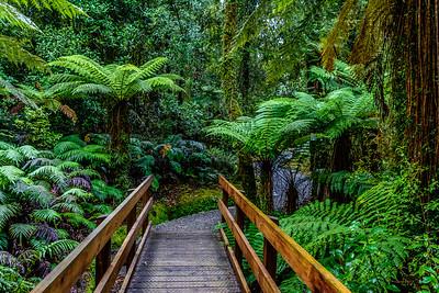 Hokitika Gorge Trail, NZ