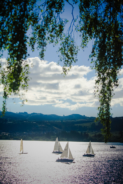 Tree_sailboats