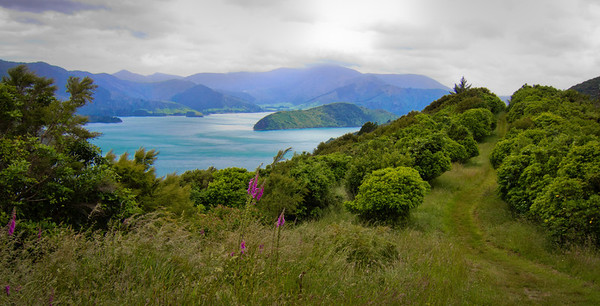 Queen Charlotte Track, Marlborough Sounds.