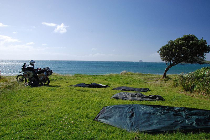 Port Jackson DOC campsite, top of Coromandel Peninsula