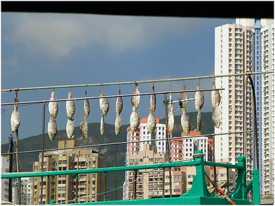 Hong Kong is made up of more than 200 islands, and even among high rise buildings will be seen rows of fish drying.