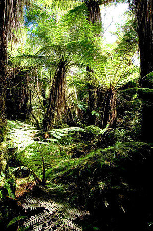 Ferns- Franz Josef, New Zealand