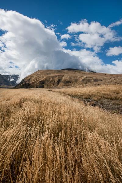 Golden Grass - en route to Mt. Sunday
