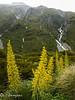 Aoraki Mt.Cook Natl. Park, South Island